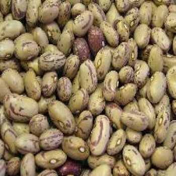 Beans - Cranberry / Romano Beans