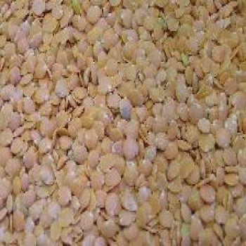 Beans - Red Lentil Beans